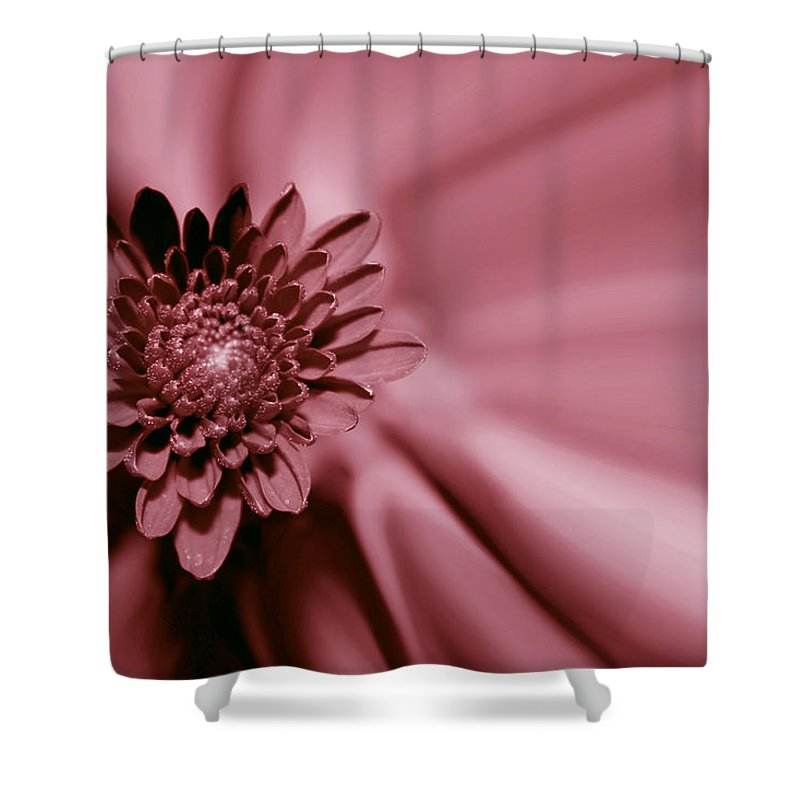 Red Mum Shower Curtain featuring the photograph Red Mum by Linda Sannuti