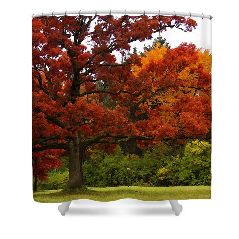 Oak Tree Leaves Red Orange Green Nature Outdoors Arboretum Foliage Grass Trunk Mighty Beauty Natural Flora Botanical Fall Autumn Autumnal Seasonal Landscape Park Shower Curtain featuring the photograph Red Oak by Lyle Hatch