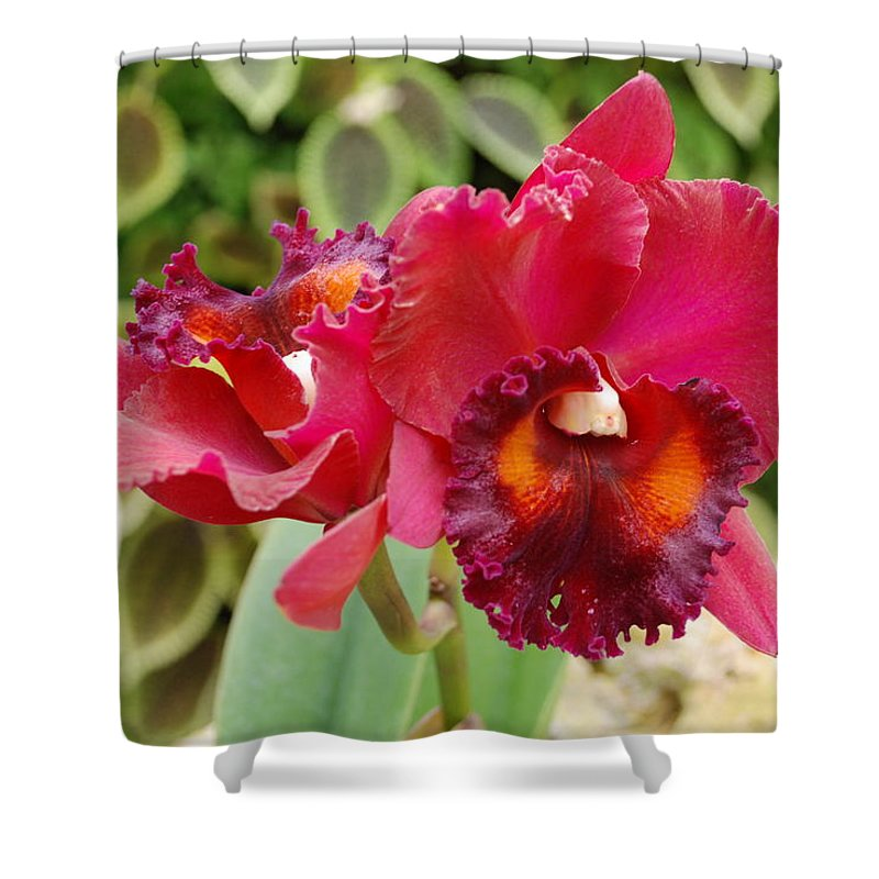 Macro Shower Curtain featuring the photograph Red Orchid by Rob Hans