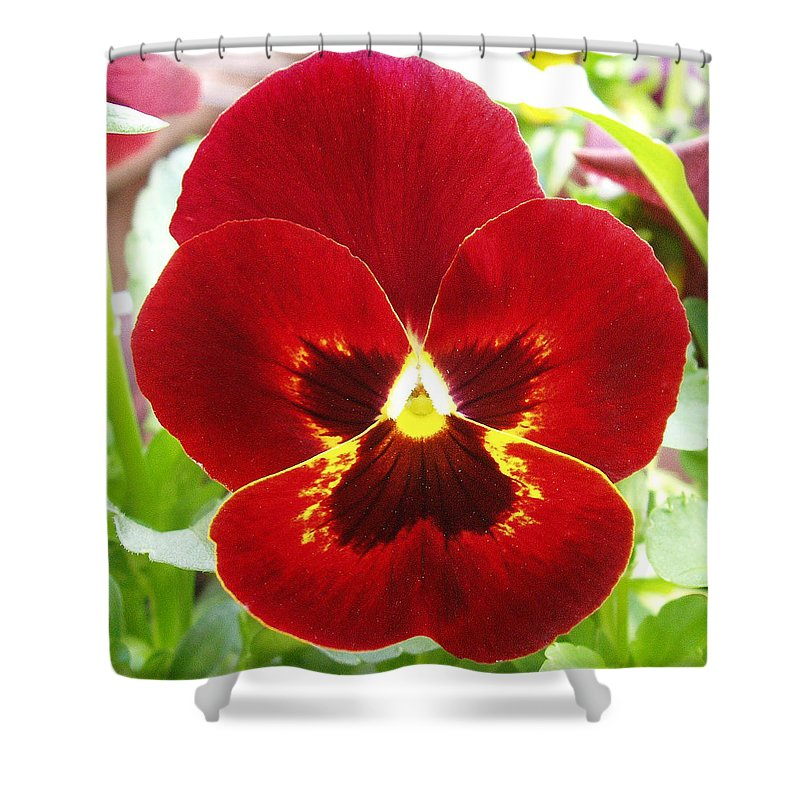Red Shower Curtain featuring the photograph Red Pansy by Nancy Mueller