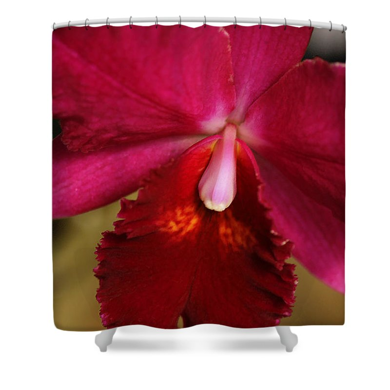 Flower Shower Curtain featuring the photograph Red Passion Orchid by Deborah Benoit