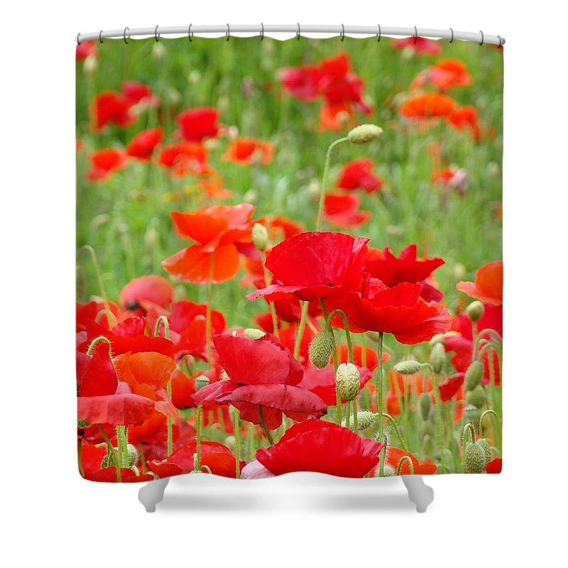 Poppy Shower Curtain featuring the photograph Red Poppy Flowers Meadow Art Prints Poppies Baslee Troutman by Baslee Troutman