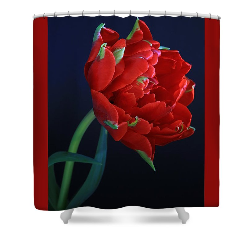 Red Princess On Blue By Rusalka Koroleva Shower Curtain featuring the photograph Red Princess Tulip On Blue by Rusalka Koroleva