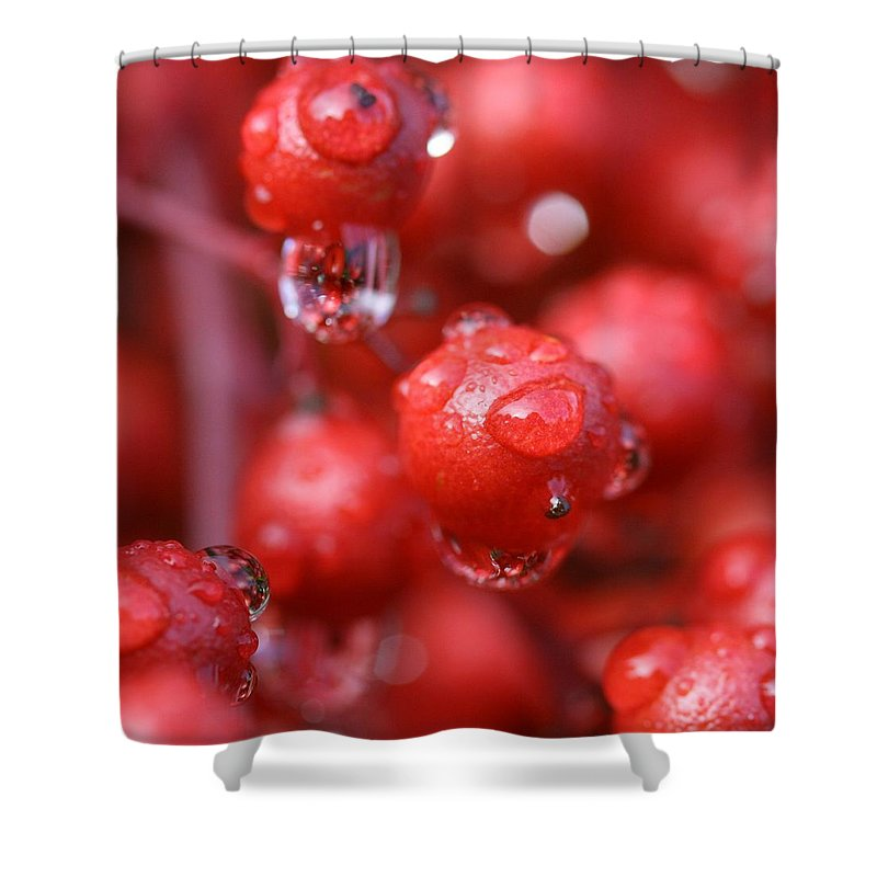 Red Shower Curtain featuring the photograph Red Rain by Mitch Cat