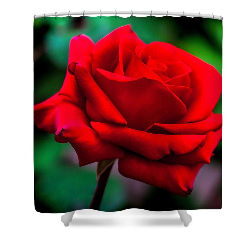 Spring Flowers Shower Curtain featuring the photograph Red Rose 2 by Az Jackson