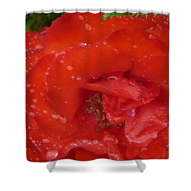 Rose Shower Curtain featuring the photograph Red Rose After Rain by Valerie Ornstein