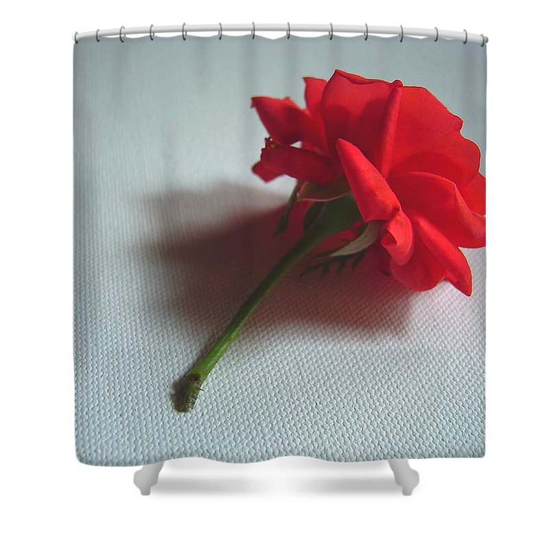 Red Shower Curtain featuring the photograph Red Rose Plucked by Usha Shantharam