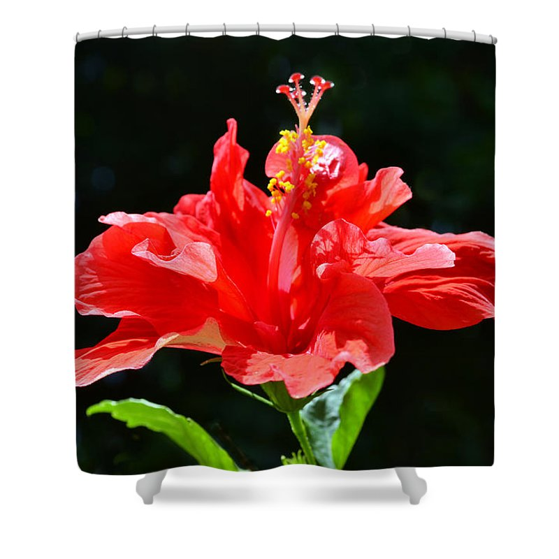Hibiscus Shower Curtain featuring the photograph Red by Sandi OReilly