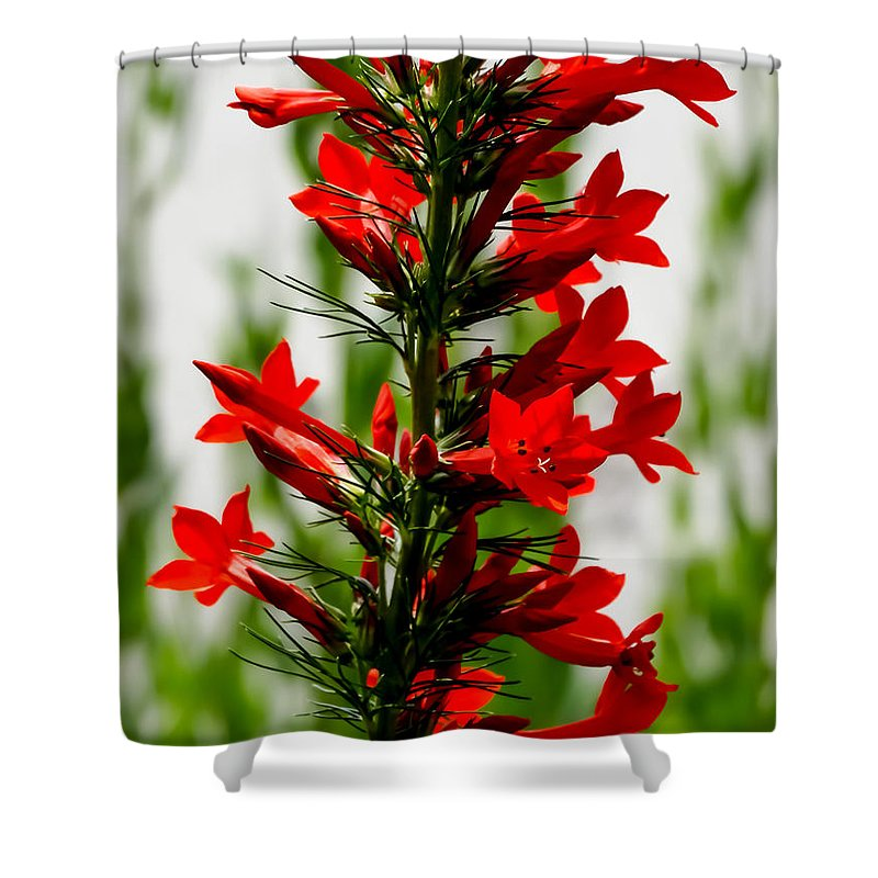Red Texas Plume Flowers Shower Curtain featuring the photograph Red Texas Plume Flowers by Cynthia Woods