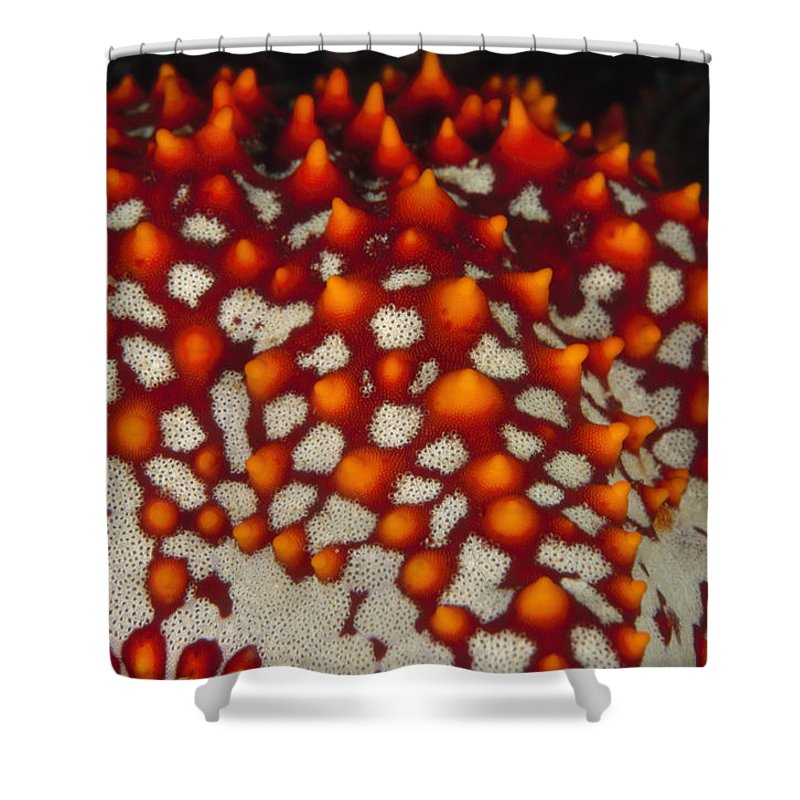 Diving Shower Curtain featuring the photograph Red Thorns Of A Sea Star, Pentaceraster by James Forte