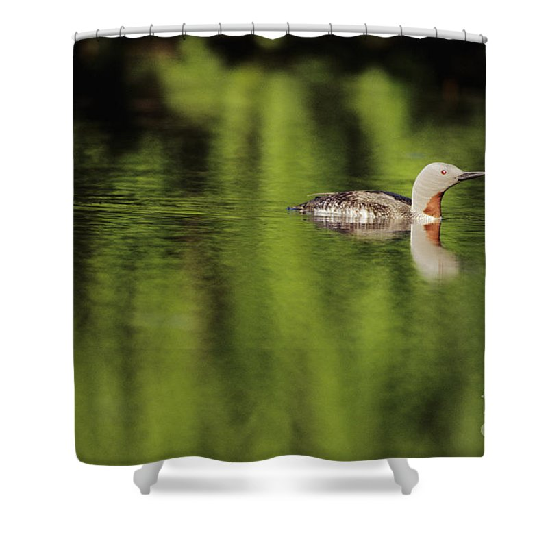 Alaska Shower Curtain featuring the photograph Red Throated Loon by John Hyde - Printscapes