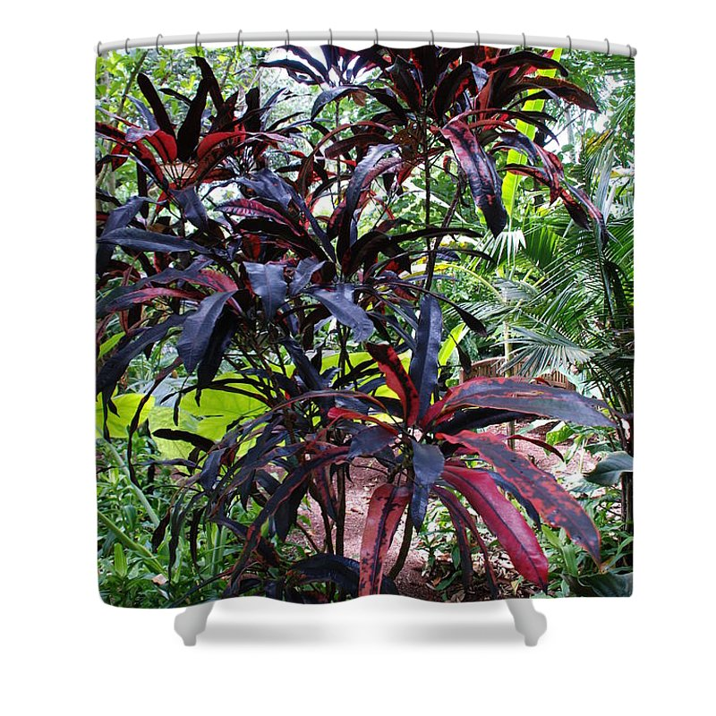 Red Shower Curtain featuring the photograph Red Trees by Rob Hans
