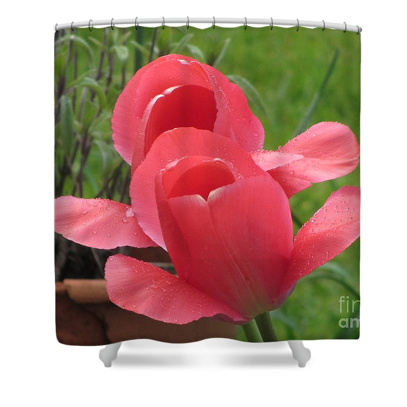 Tulip Shower Curtain Featuring The Photograph Singing In Rain By Jackie Tweddle