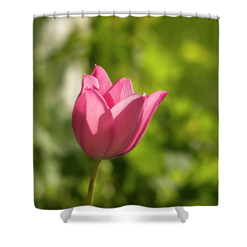 Tulip In The Garden Shower Curtain featuring the photograph Red Tulip head by Cliff Norton