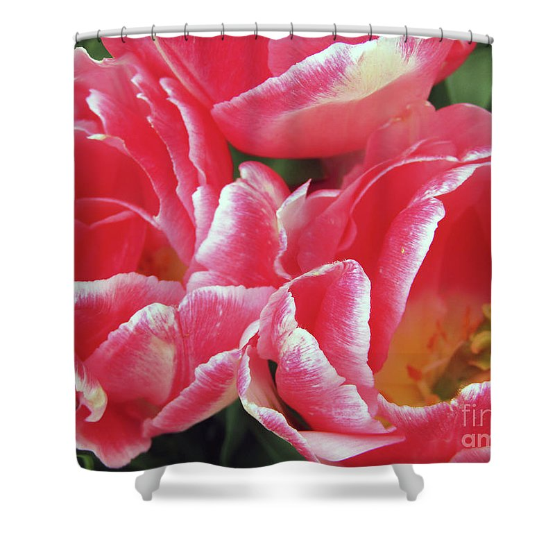 Tulips Shower Curtain featuring the photograph Red Tulips by Kim Tran