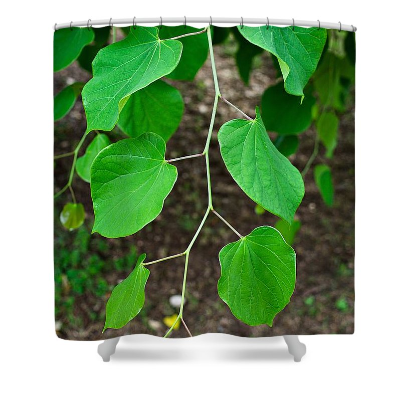 Redbud Shower Curtain featuring the photograph Redbud Green by Gary Richards