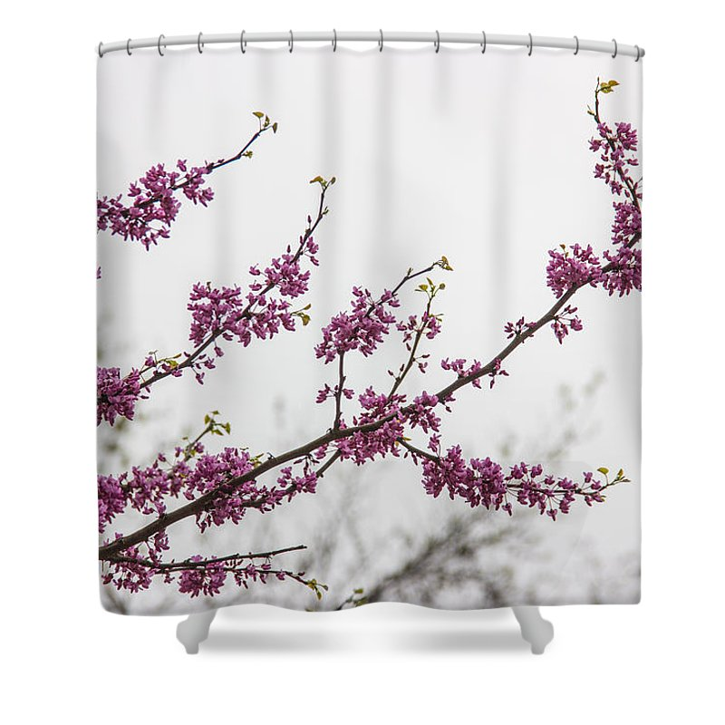 Beauty Shower Curtain Featuring The Photograph Redbud Tree Branch By Robert Kinser