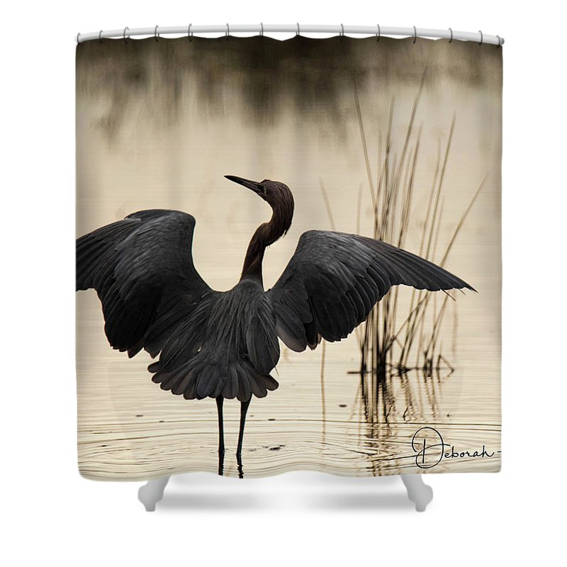 Florida Shower Curtain featuring the photograph Reddish Egret by Deborah Kainauskas