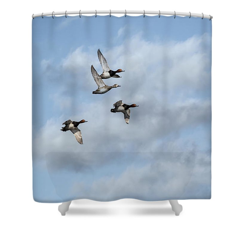 Redheaded Ducks Shower Curtain featuring the photograph Redheaded Ducks Riding The Storm by Thomas Young