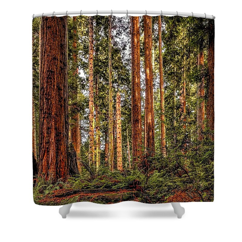 Redwood Shower Curtain featuring the photograph Redwood Forest Landscape by Jeffrey Schwartz