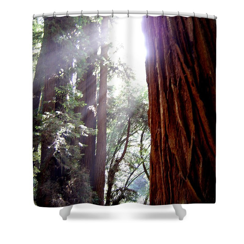Redwoods Shower Curtain featuring the photograph Redwood Sunlight by Mary Rogers