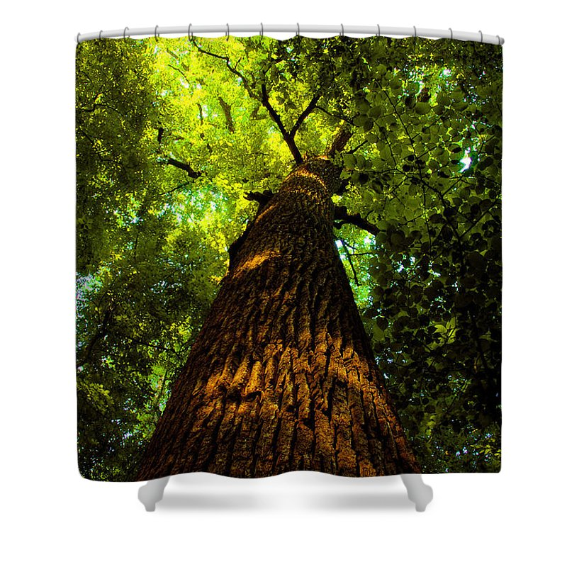 Redwood Forest Shower Curtain featuring the painting Redwoods by David Lee Thompson