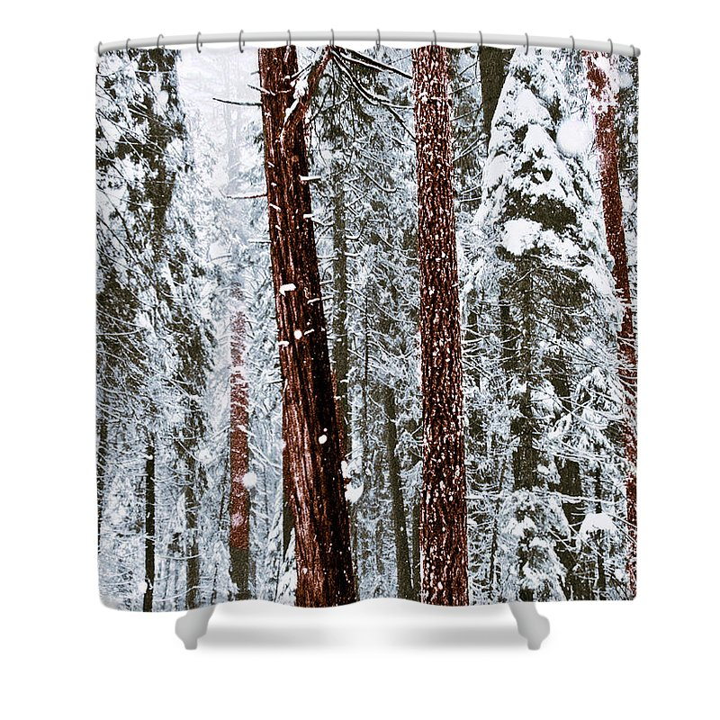 Landscape Shower Curtain featuring the photograph Redwoods In Snow by Karen W Meyer