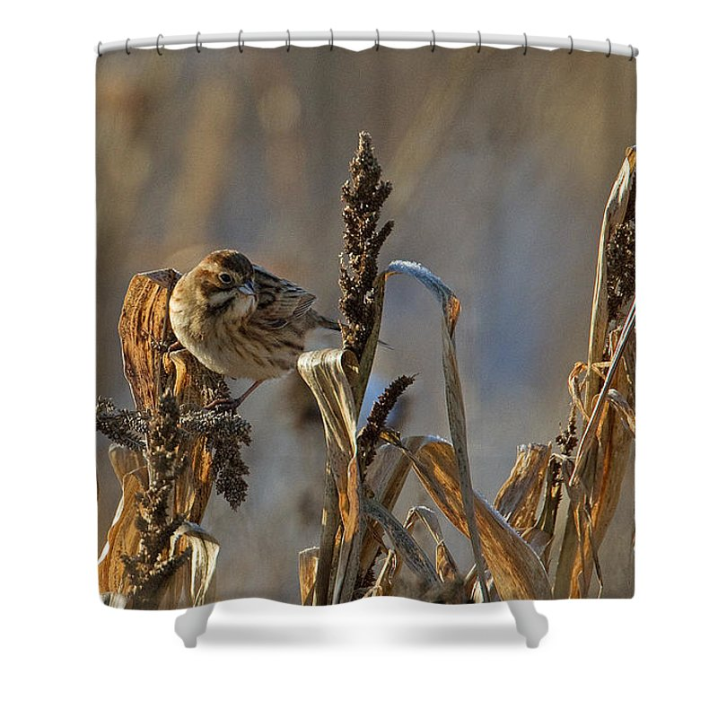 Reed Bunting Shower Curtain featuring the photograph Reed Bunting by Bob Kemp