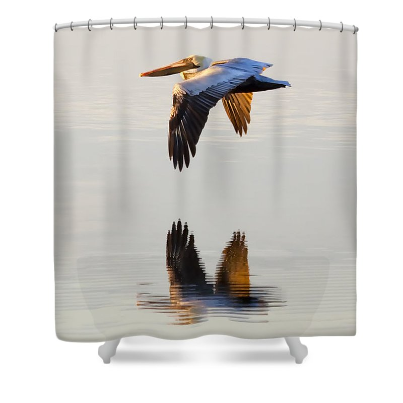 Pelican Shower Curtain featuring the photograph Reflecting Flight by Janet Fikar