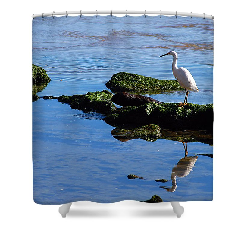 Clay Shower Curtain featuring the photograph Reflecting On Dinner by Clayton Bruster