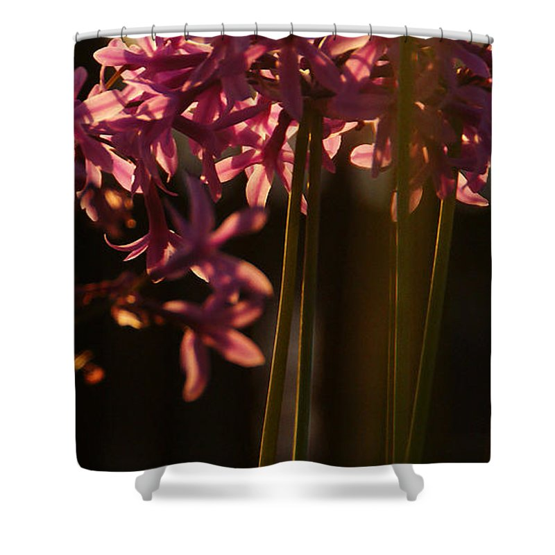 Sunset Shower Curtain featuring the photograph Reflecting The Day by Linda Shafer