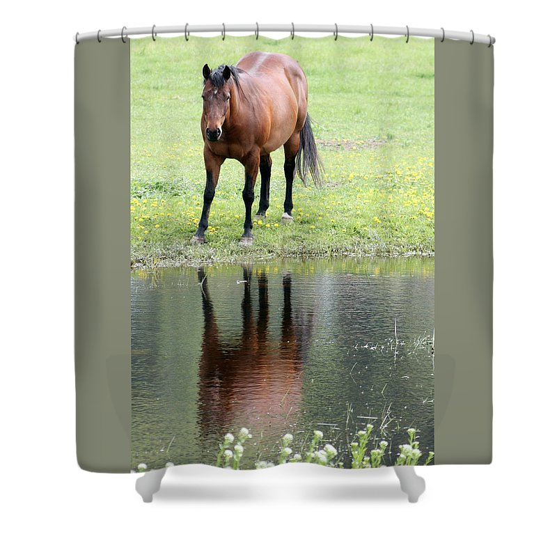 Horse Shower Curtain featuring the photograph Reflecting Horse Near Water by Tiffany Vest