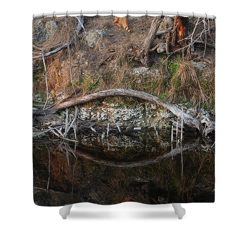 Iguana Shower Curtain featuring the photograph Reflections Iguana by Rob Hans
