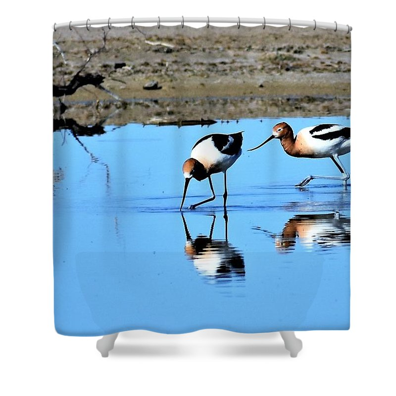 Amaerican Avocet Shower Curtain featuring the photograph Reflections by Linda Burns