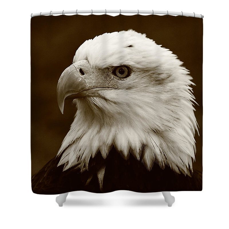 Eagle Shower Curtain Featuring The Photograph Regal By Bruce J Robinson