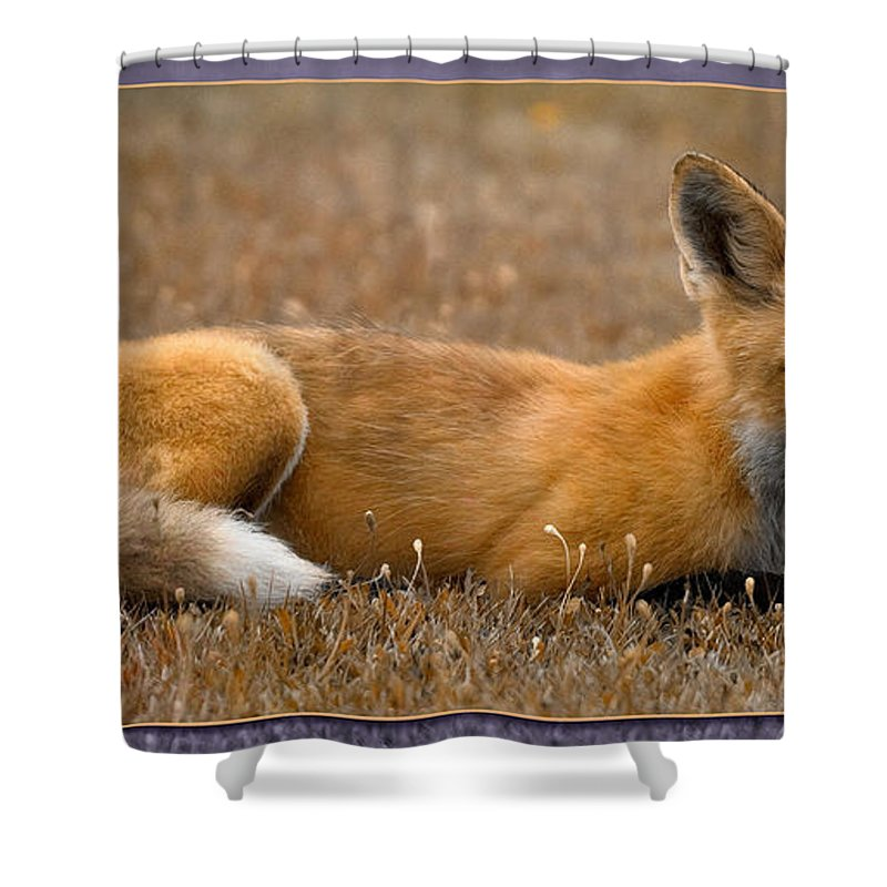 Fox Shower Curtain featuring the photograph Relax 3 by WB Johnston