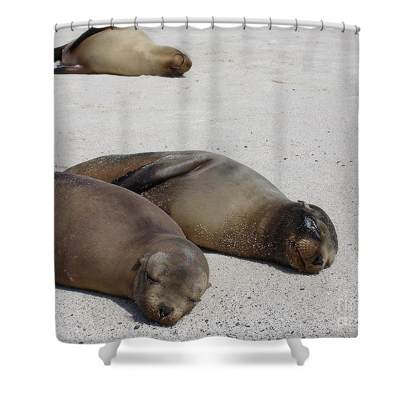 Seals Shower Curtain featuring the photograph Relax by Chad Natti