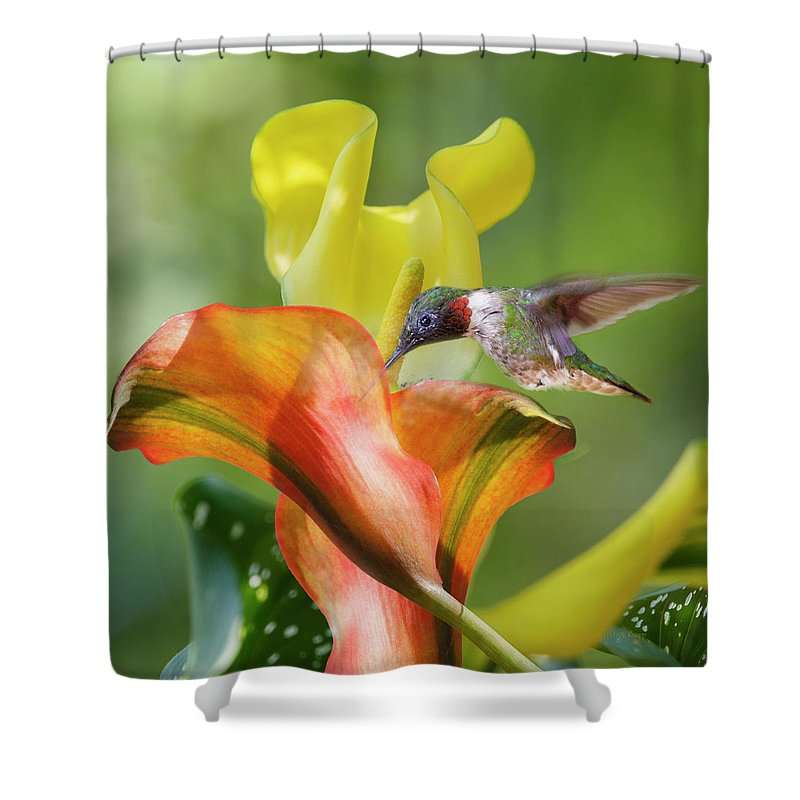 Hummingbird Shower Curtain featuring the photograph Remarkable Inspiration by Betsy Knapp