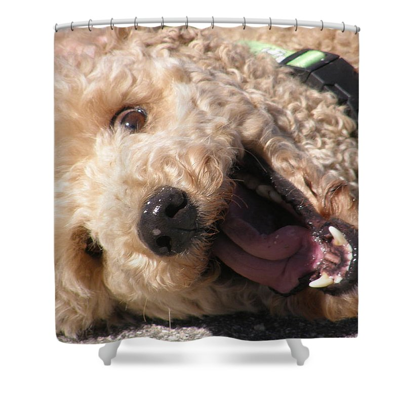 Poodle Shower Curtain featuring the photograph Remmi At Baer Creek by Amber Stubbs