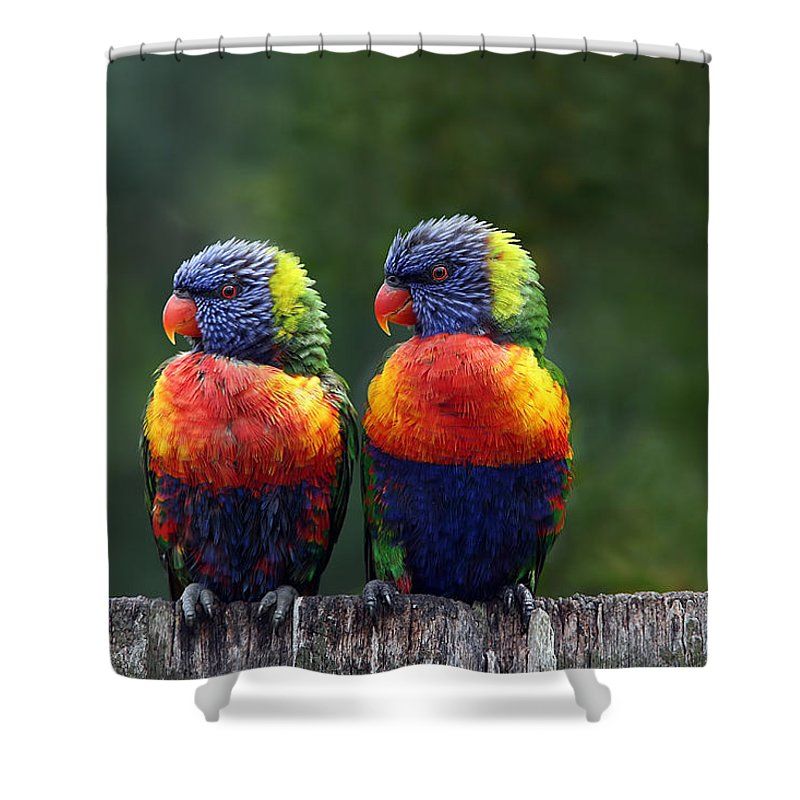 Parrot Shower Curtains