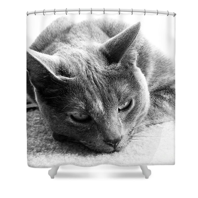 Cats Shower Curtain featuring the photograph Resting by Amanda Barcon