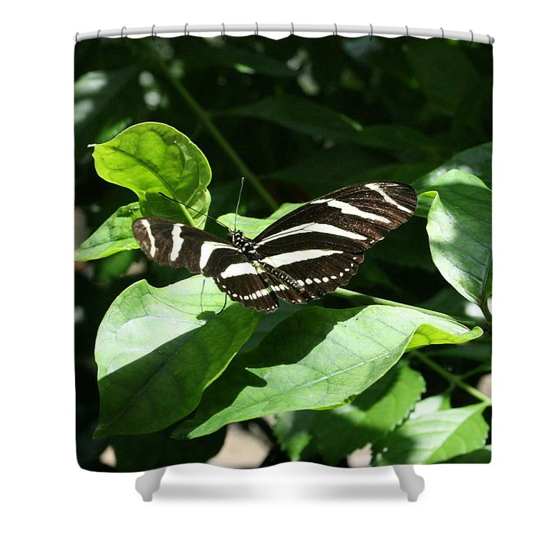 Black Shower Curtain featuring the photograph Resting - Black And White Butterfly by Lynn Michelle