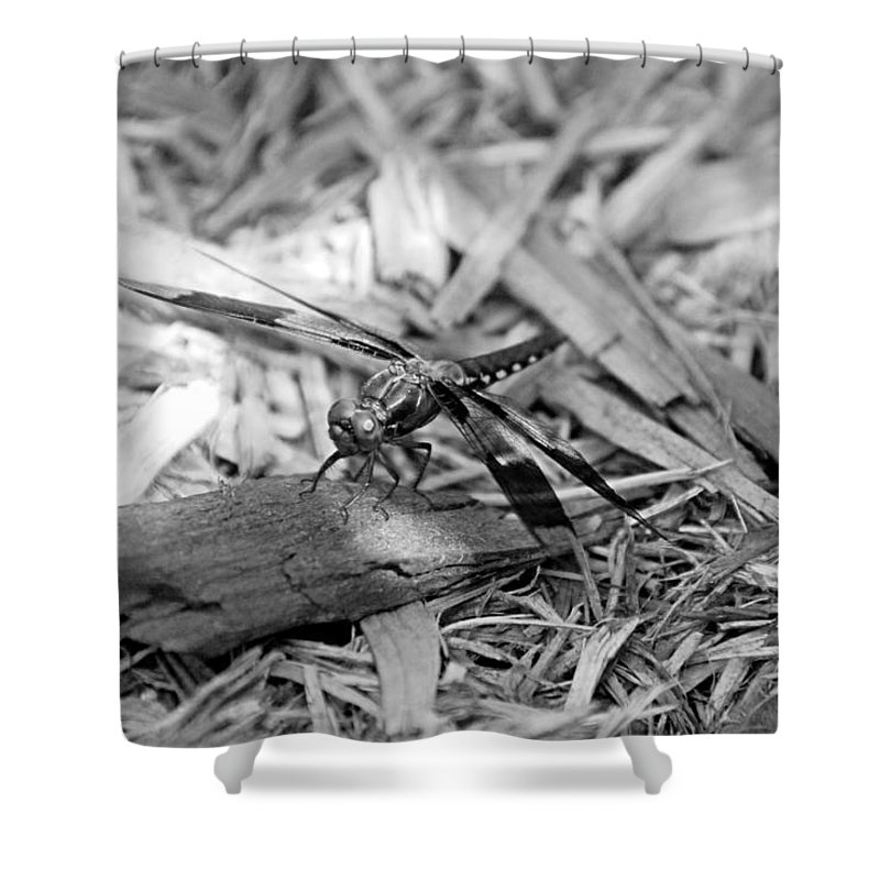Dragonfly Shower Curtain featuring the photograph Resting Dragonfly by Katherine Nutt