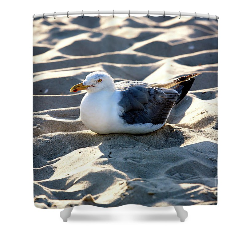 Resting Shower Curtain featuring the photograph Resting by John Rizzuto