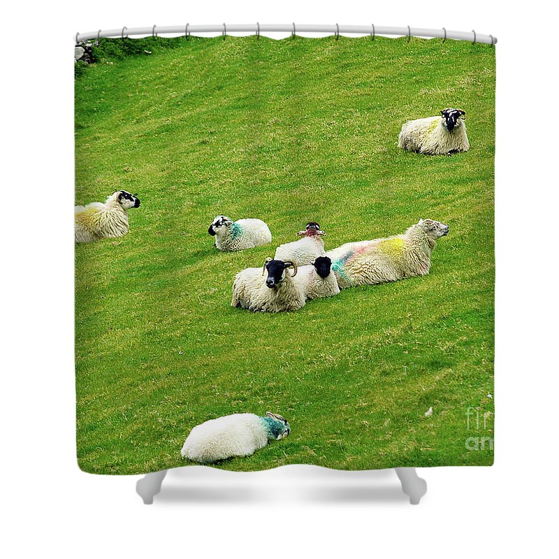Sheep Photography Shower Curtain featuring the photograph Resting by Patricia Griffin Brett