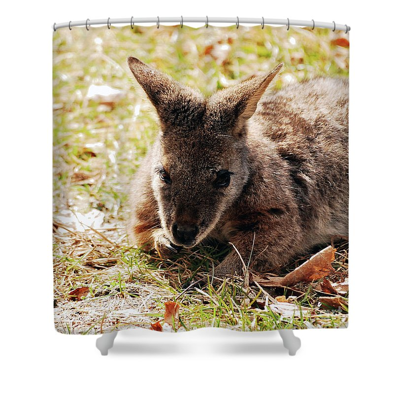 Wallaby Shower Curtain featuring the photograph Resting Wallaby by Lori Tambakis