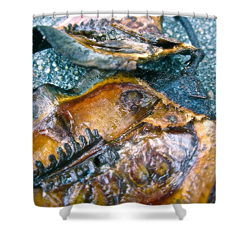 Tree Pod Shower Curtain featuring the photograph Revealing Tree Pod by Gwyn Newcombe