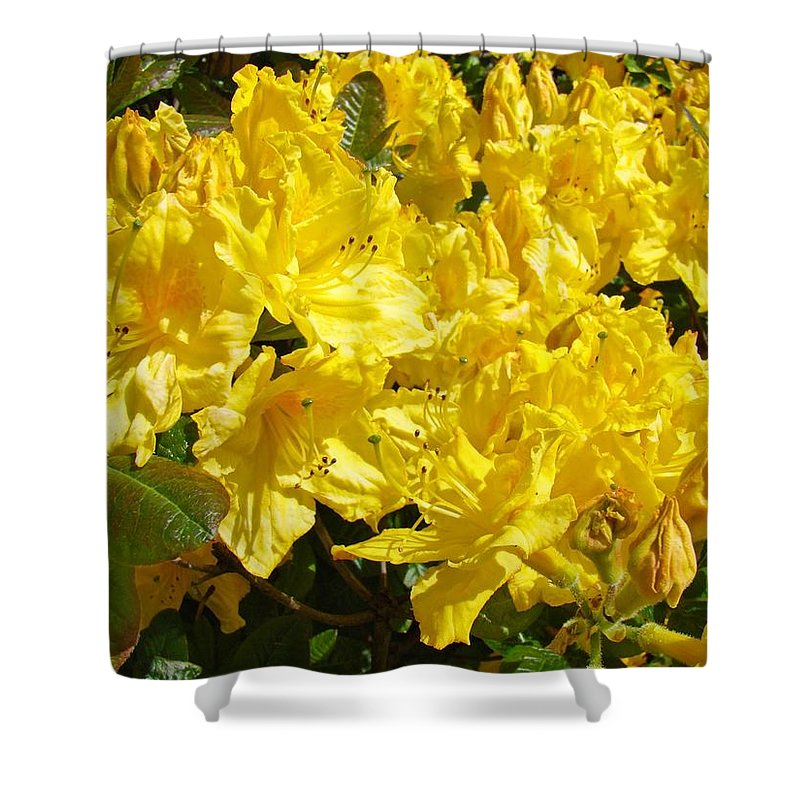 Rhodie Shower Curtain featuring the photograph Rhodies Yellow Rhododendrons Art Prints Baslee Troutman by Baslee Troutman