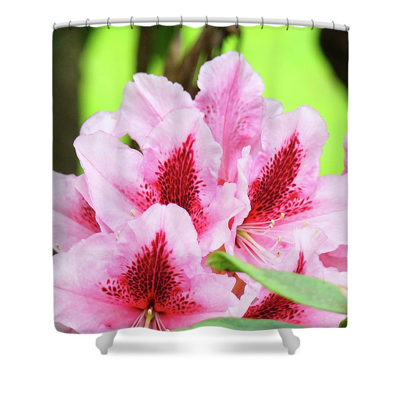 Rhodie Shower Curtain featuring the photograph Rhododendron Floral Art Prints Rhodies Flowers Canvas Baslee Troutman by Baslee Troutman