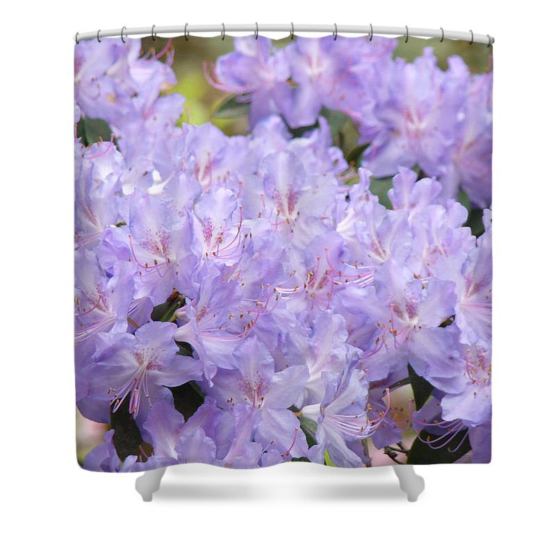 Nature Shower Curtain featuring the photograph Rhododendron Floral Flowers Lavender Purple Prints Baslee by Baslee Troutman